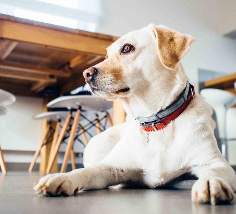 La santé de votre chien, naturellement | Vita Nutririon Animale - www.vitanutrition.ca