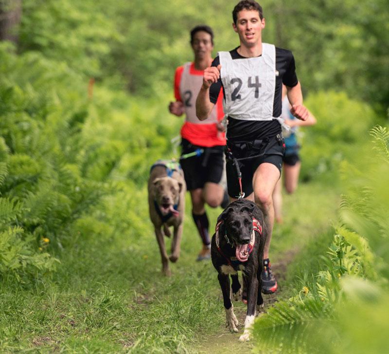 eBook | Sport attelés mono-chien : Canicross, bikejoring | Vita Nutrition Animale © danieltphoto