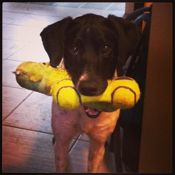 Elsie et ses jouets | Vita DogTeam | Vita Nutrition Animale - www.vitanutrition.ca