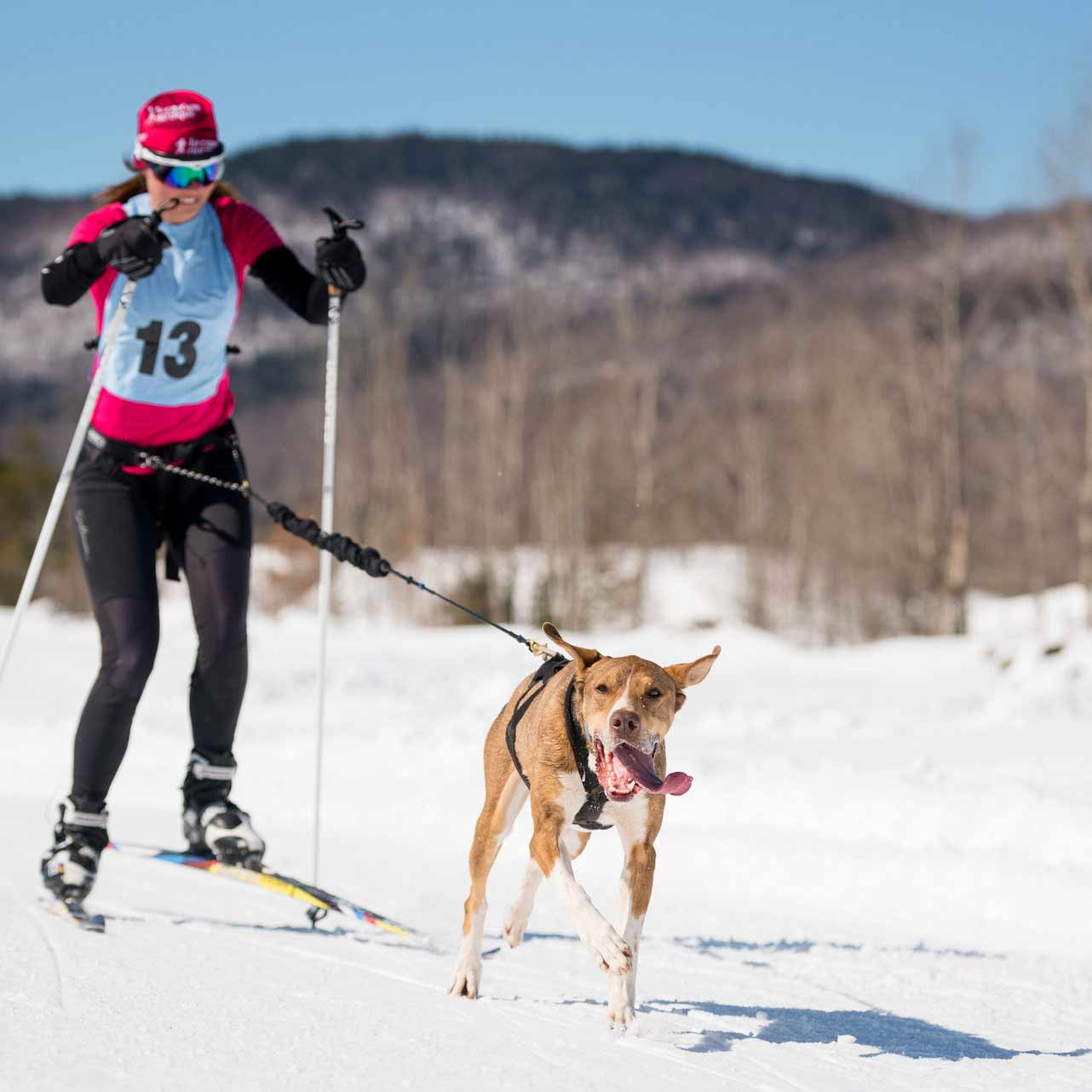 Maude en ski | Vita DogTeam | Vita Nutrition Animale - www.vitanutrition.ca