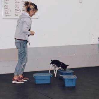 Détection d'odeurs | Vita DogTeam | Vita Nutrition Animale - www.vitanutrition.ca