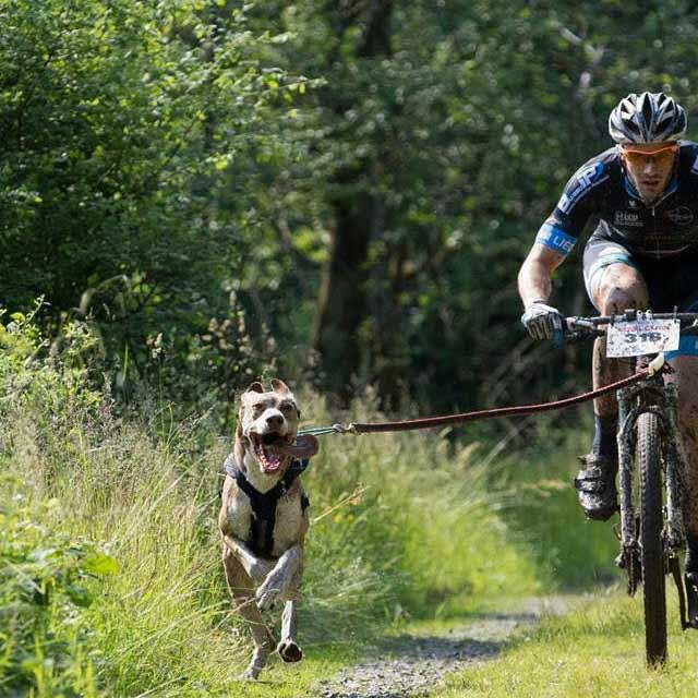 Le bikejoring : Article 3 : L'enregistrement des données