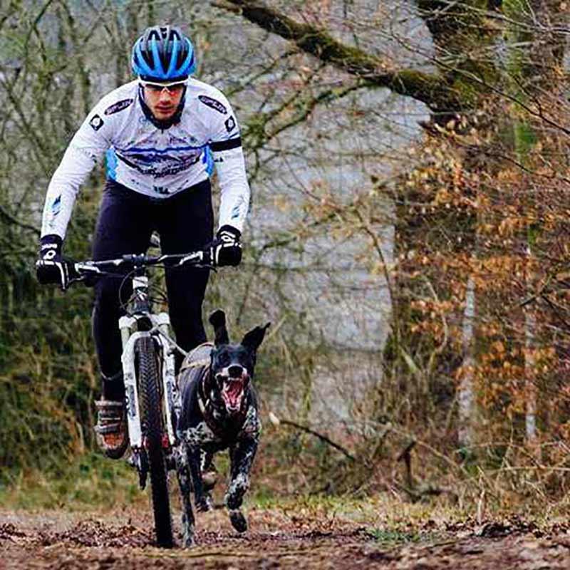 Le Bikejoring : Article 1 : Choisir son vélo pour la pratique du sport