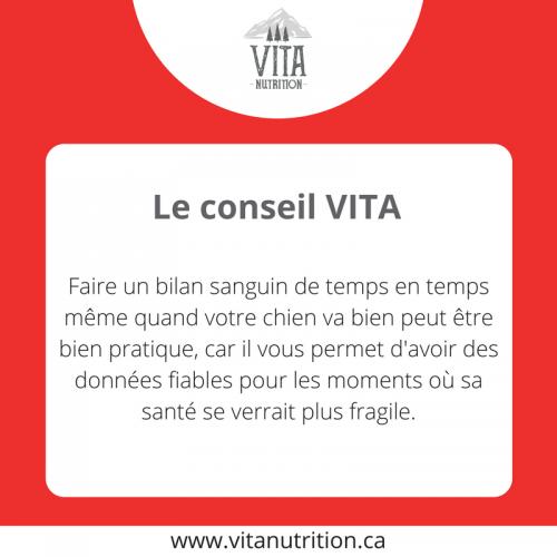 Faire un bilan sanguin régulièrement | Le Conseil Vita | Vita Nutrition Animale - www.vitanutrition.ca
