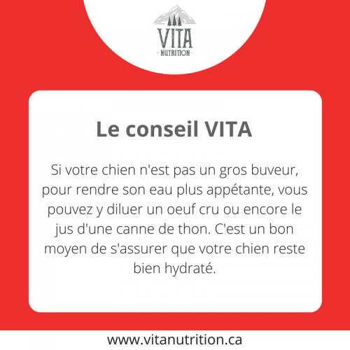 Rendre l'eau appétante | Le Conseil Vita | Vita Nutrition Animale - www.vitanutrition.ca