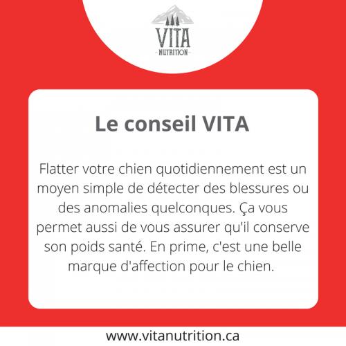 Flatter son chien quotidiennement | Le Conseil Vita | Vita Nutrition Animale - www.vitanutrition.ca