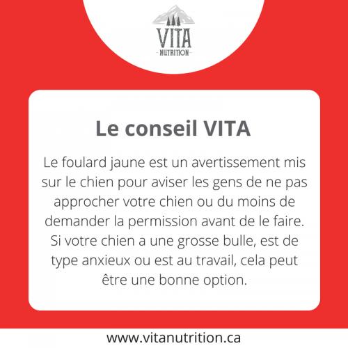 Foulard jaune | Le Conseil Vita | Vita Nutrition Animale - www.vitanutrition.ca
