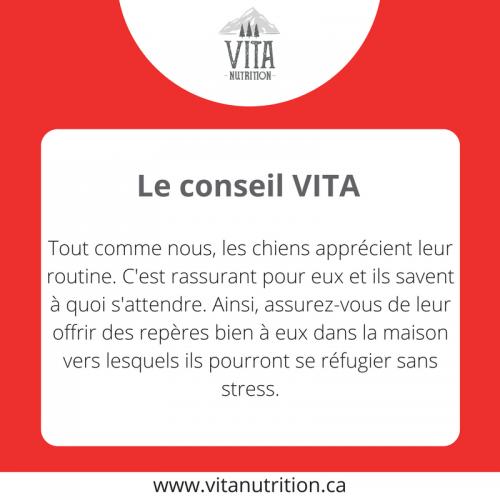 Les chiens et la routine | Le Conseil Vita | Vita Nutrition Animale - www.vitanutrition.ca