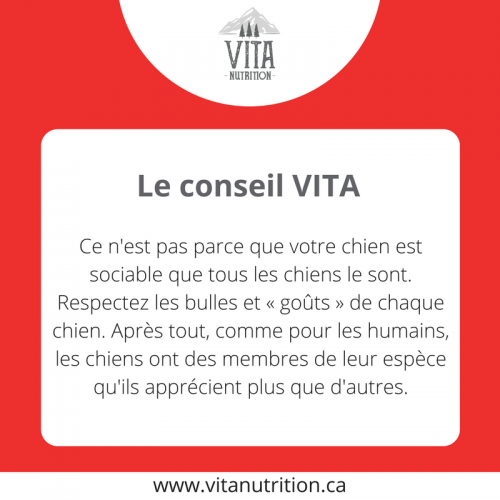 Chien sociable VS non sociable | Le Conseil Vita | Vita Nutrition Animale - www.vitanutrition.ca
