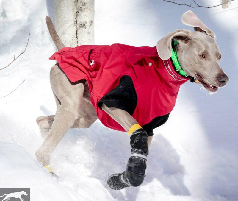 Mes trucs pour grand chien frileux en hiver